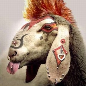 punk-rock-goat