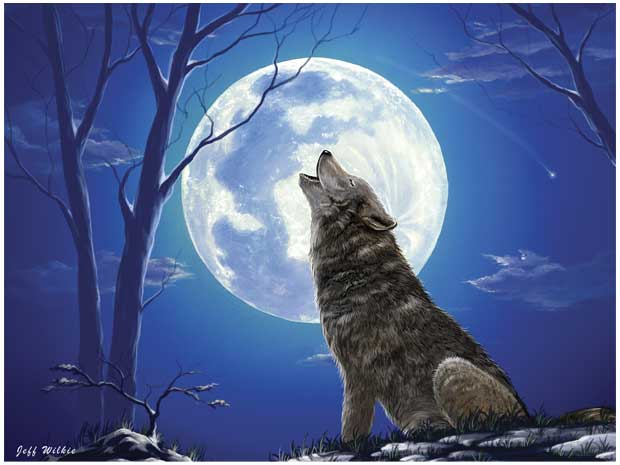 Gray Wolf Howling Drawing lone wolf | The Clare ...